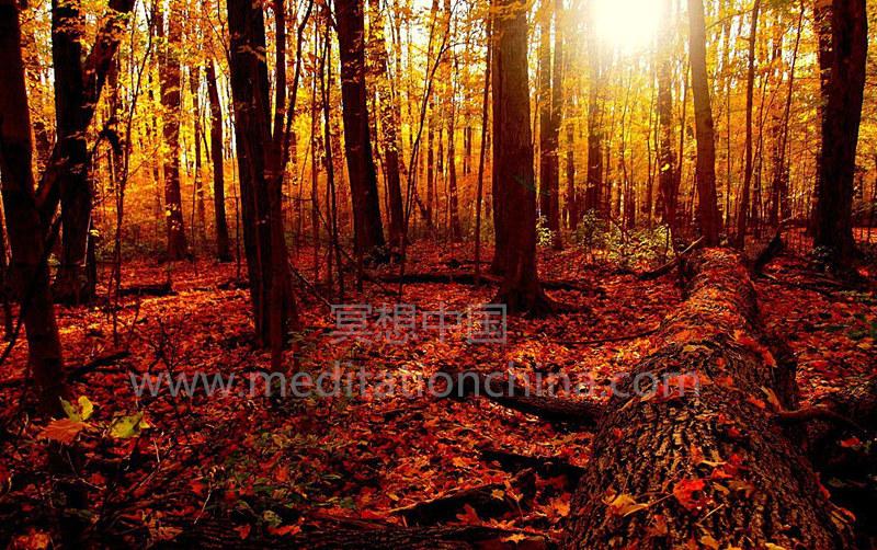 秋天催眠曲——儿童睡眠时间音乐
