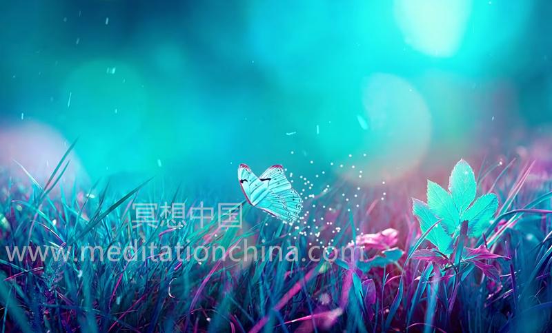 蝴蝶效应II⁂提高正能量振动⁂432Hz音乐