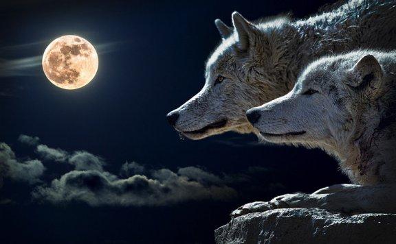 3H印第安长笛音乐狼本能,冥想音乐萨满星体投射
