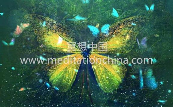 蝴蝶效应显现奇迹,带来积极的变化-提升你的振动